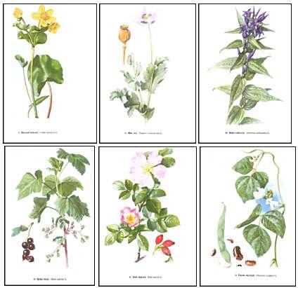 Atlas rostlin pdf